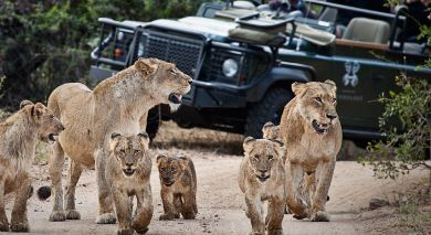 Example private tour: South Africa – Western Cape and Kruger