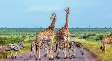 Example private tour: South Africa: Western Cape Overland