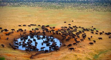Example private tour: Safari Highlights of Kenya