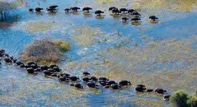 Empfohlene Individualreise, Rundreise: Botswanas glitzernde Wasserwunderwelten