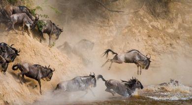 Empfohlene Individualreise, Rundreise: Luxus am See, Wildnis und wilde Tiere in Tansania