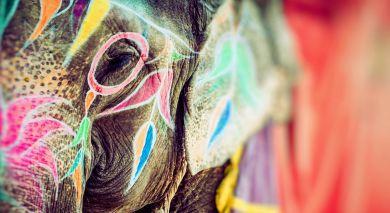 Empfohlene Individualreise, Rundreise: Majestätisches Nordindien: Holi Spezial