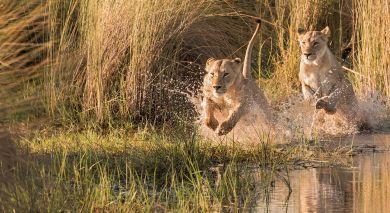 Empfohlene Individualreise, Rundreise: Botswana & Simbabwe: Safari-Angebot von Machaba