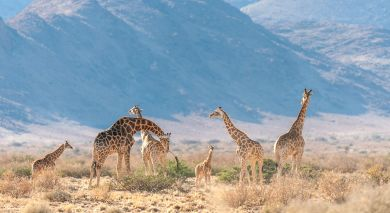 Example private tour: Namibia and South Africa: Highlights of the South