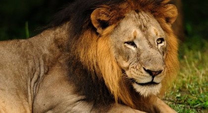 Destination Gir in Central & West India