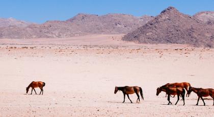 Aus in Namibia