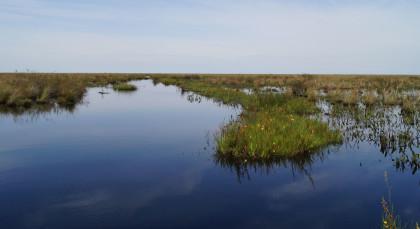 Esteros del Iberá in Argentinien