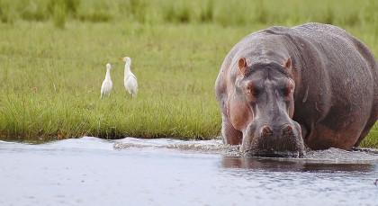 Destination Chobe National Park in Botswana