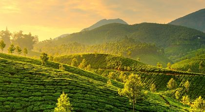Destination Munnar in South India