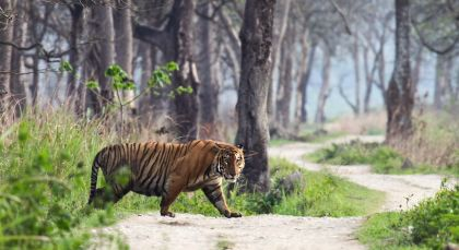 Reiseziel Ranthambore in Nordindien