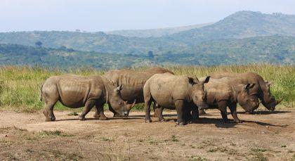 Destination Hluhluwe in South Africa