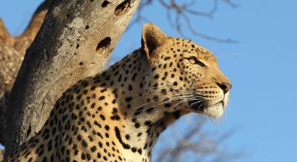 Reiseziel Krüger in Südafrika
