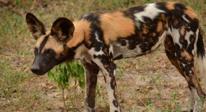 Reiseziel Selous in Tansania