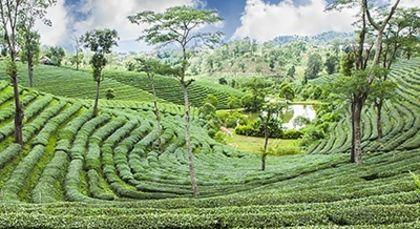 Sri Lanka Tours in Asia