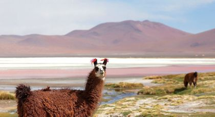Destination Ojo de Perdiz in Bolivia