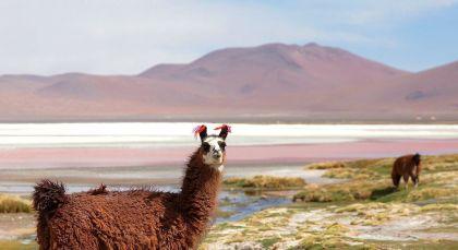 Reiseziel Ojo de Perdiz in Bolivien