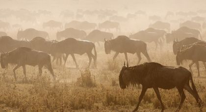 Destination Central Serengeti in Tanzania