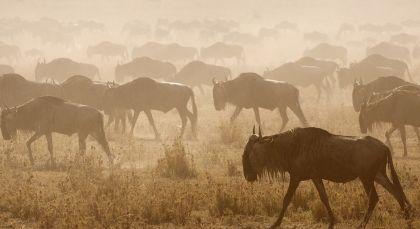 Reiseziel Zentrale Serengeti in Tansania