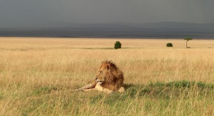 Destination Masai Mara Conservancy in Kenya