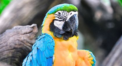 Destination Amazonas in Brazil
