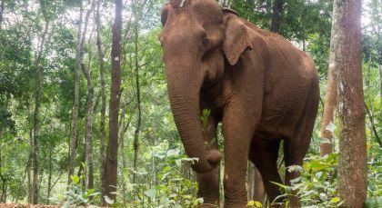 Destination Mondulkiri in Cambodia