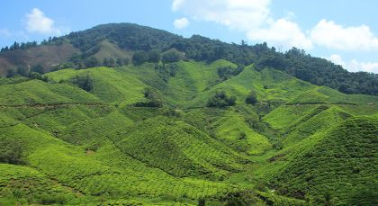 Cameron Highlands in Malaysia