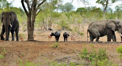 Destination Kruger South in South Africa