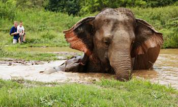 a elephant that is standing in the grass