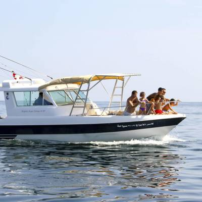 Dolphin watching excursion