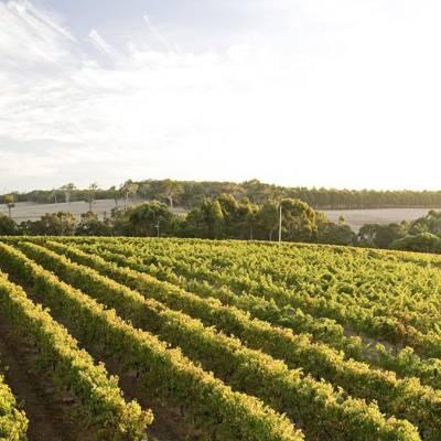 Margaret River vineyard