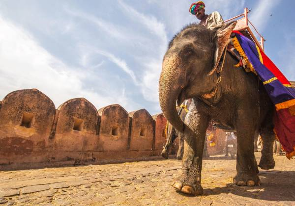 An Elephant at the Amber Palace, Jaipur