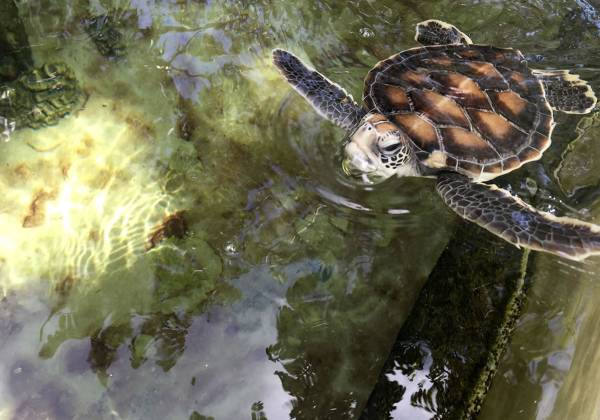 a close up of a turtle