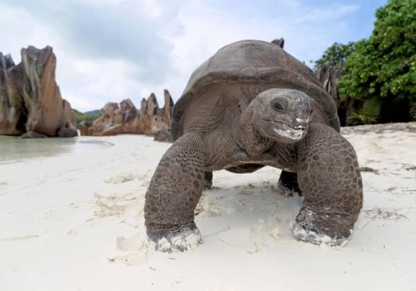tortoise on curieuse island
