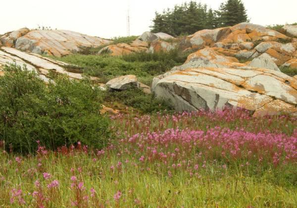 a field of flowers on a rock