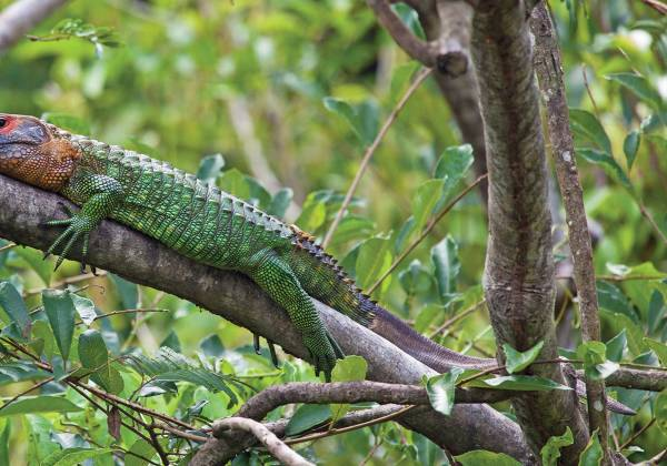 a lizard on a branch