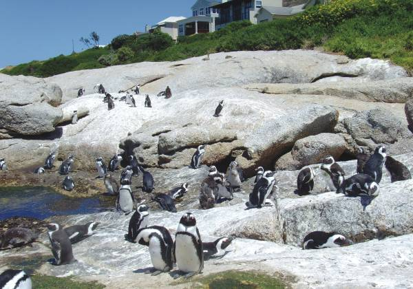 a penguin standing on a rocky beach
