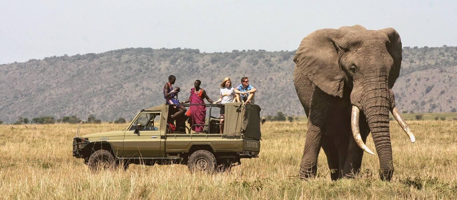 African Elephant Kenya Safari