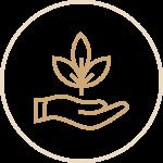 Palm Growth Icon