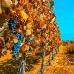 Tales of the Great Grape: It's Wine Tour Time!