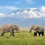 Elefanten, im Hintergrund der Mount Kilimanjaro