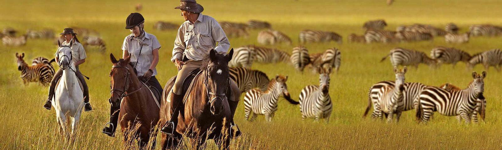 African serengeti-national-park-zebras