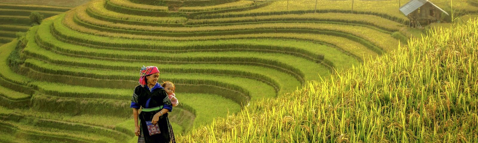 Mother and baby were walking in a symbol of Mu cang chai rice terraces Vietnam