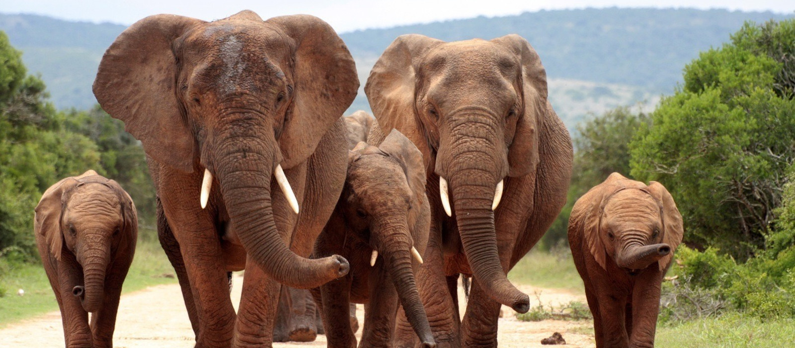 Addo elephant national park,eastern cape,south africa, shutterstock_102111370