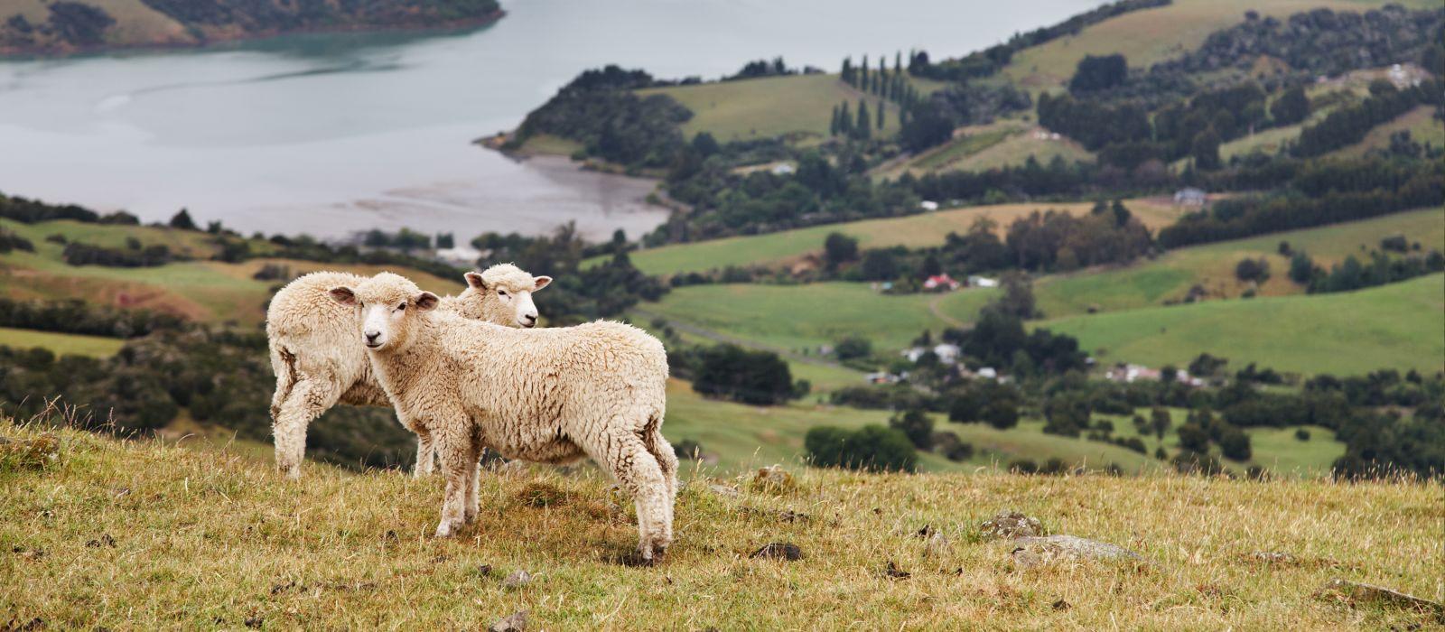 New Zealand landscape, Banks Peninsula
