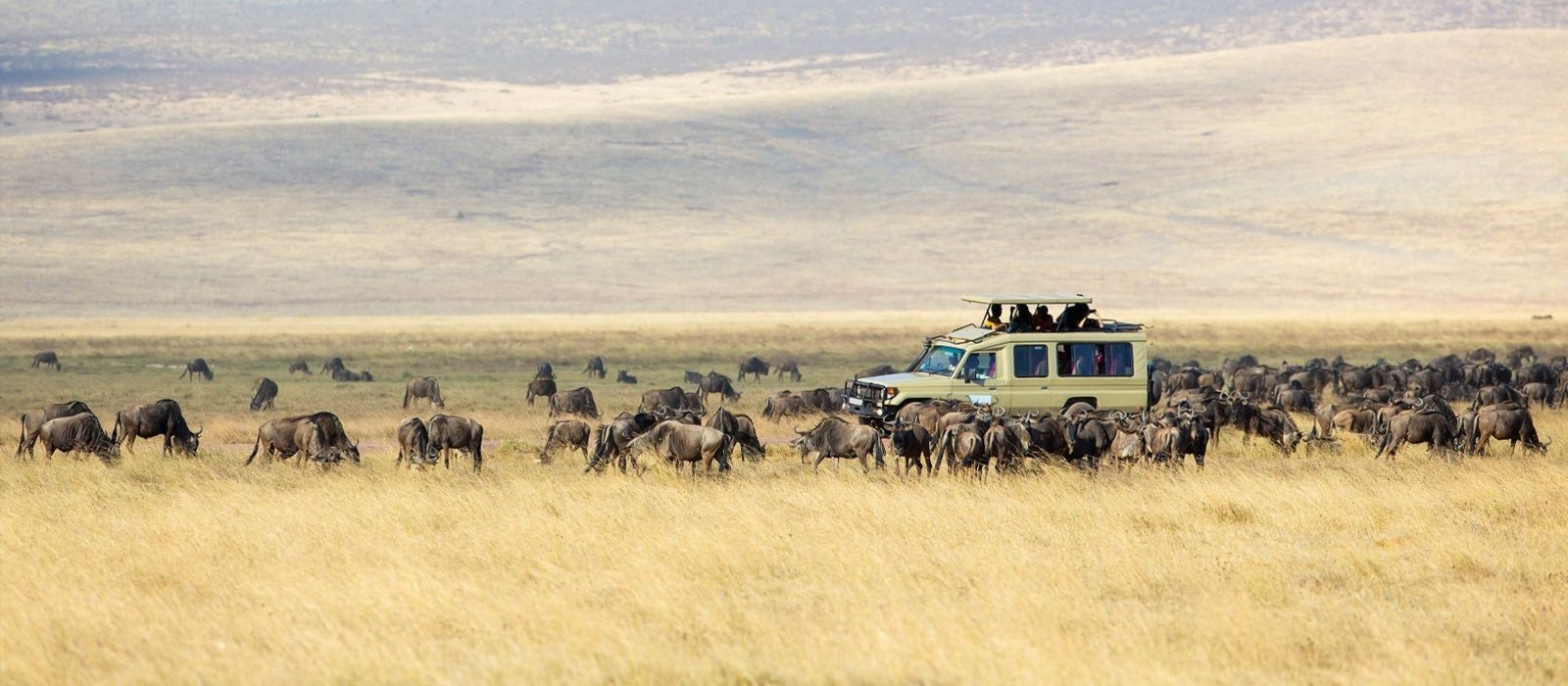 Great Migration in Tansania