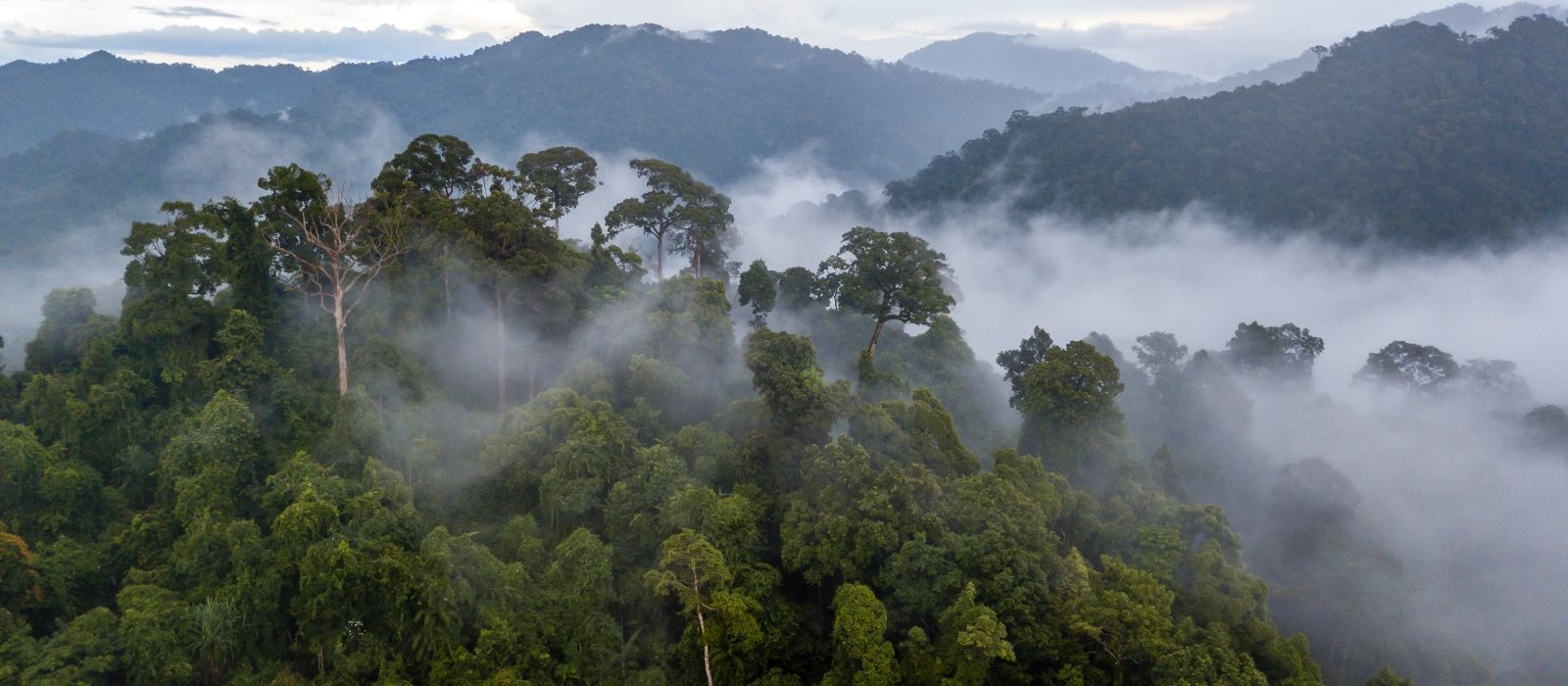 Aerial view of mist, cloud and fog hanging over a lush tropical rainforest after a storm, Brazil, South America