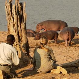 Hippo watching in South Luangwa, Zimbabwe