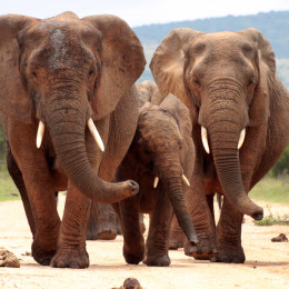 Enchanting Travels Addo elephant national park,eastern cape,south Africa