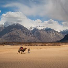 Enchanting Travels India Tours Leh Camel safari in Nubra Valley, Ladakh