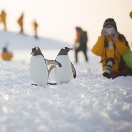 Penguins in Antarctica - Things to do in Antarctica